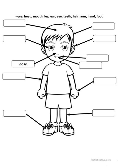 body  face parts english esl worksheets  distance