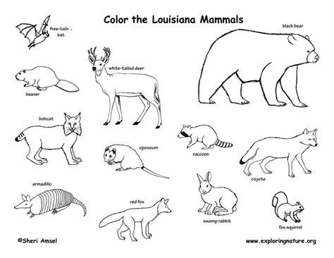 louisiana habitats mammals birds amphibians reptiles