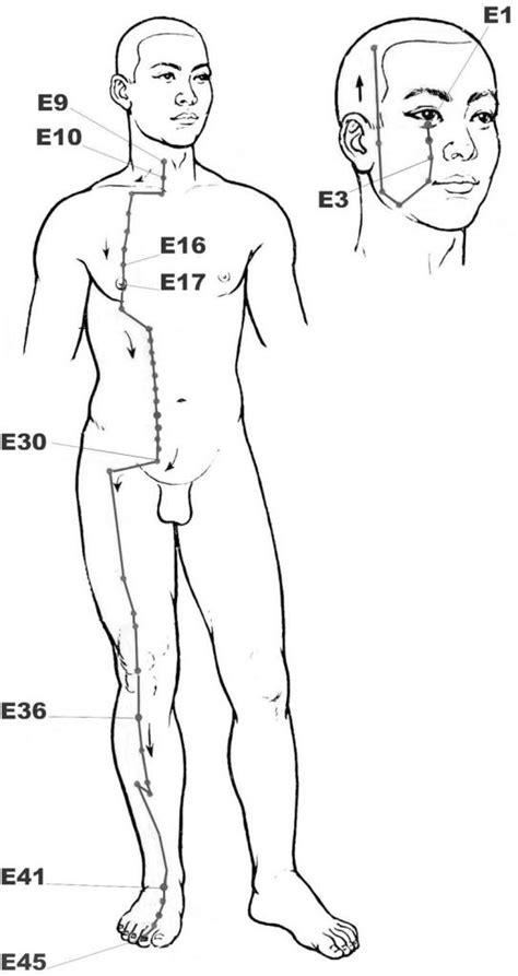 meridien du corps humain meridiens