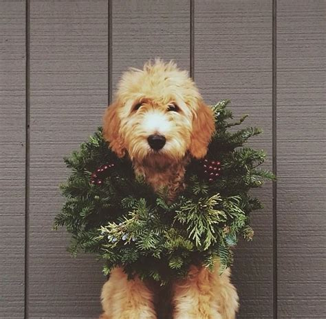weihnachts hunde foto ideen pretty planery