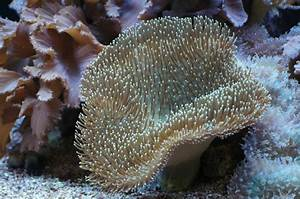 6 Easiest Coral Species to Grow And Maintain for Beginners ...