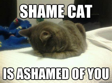 Shame Meme - shame cat is ashamed of you shame cat quickmeme
