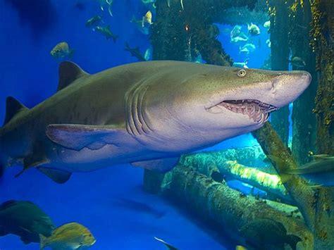 texas aquarium accidentally kills hundreds  fish