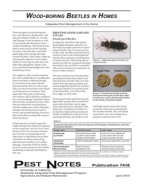 wood boring beetles  homes integrated pest management