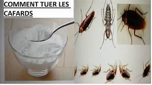 Tuer Les Cafards : comment tuer les cafards youtube ~ Melissatoandfro.com Idées de Décoration