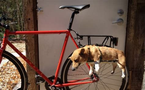 DIY dog bike basket ideas