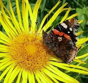 Schmetterling Am Kinderbett : wanze kapuzina ~ Lizthompson.info Haus und Dekorationen