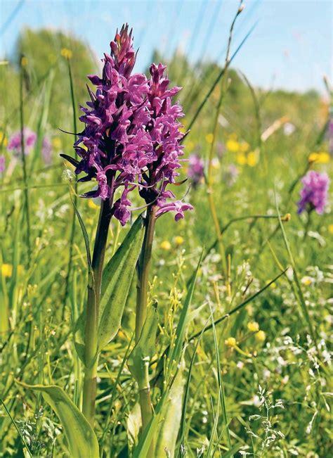 orchideen aus samen ziehen botanik orchideen beuten pilze aus wissen tagesspiegel