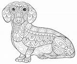 Dachshund Coloring Adult Zen Relaxing Illustration Animal sketch template