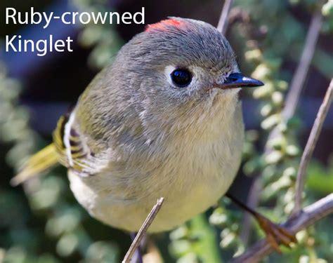 best 28 detroit audubon society macomb audubon
