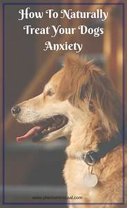 how to naturally treat dog anxiety phemommienal With anti anxiety dog music