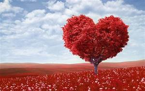 Red Love Heart Tree Wallpapers | HD Wallpapers | ID #16776