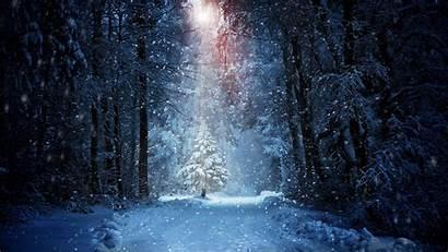 Snow Winter Forest Wallpapers 4k 1080p Desktop