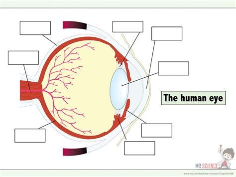 Label Eye Diagram Ks2 by Mr Science Teaching Resources Tes