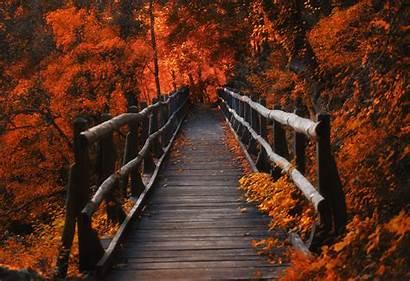 Orange Leaves Bridge Wallpapers 4k Nature Backgrounds