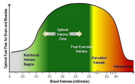 ketosis  special metabolic state  personal