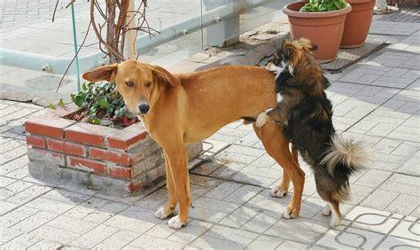 dogs  heat dogs cats  wild animals blog