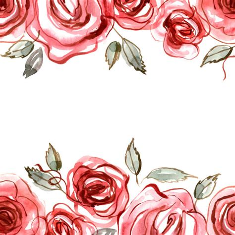 rose illustrations royalty  vector graphics