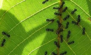 Ameisen Im Garten : ameisen im garten ~ Frokenaadalensverden.com Haus und Dekorationen