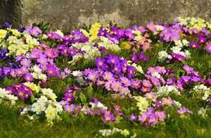 Was Ist Im Februar Im Garten Zu Tun : fr hling was jetzt im garten und auf dem balkon zu tun ~ Lizthompson.info Haus und Dekorationen