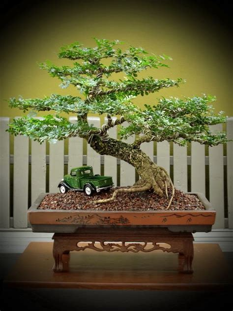 สวนจิ๋วสวยๆ - 004   Bonsai tree, Juniper bonsai, Bonsai ...