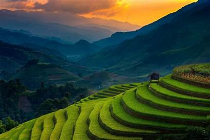Vietnam Rice Paddy Landscape Field Nature Mountain