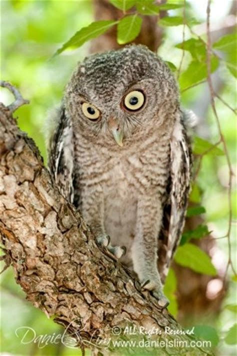 17 Best Images About Awesome Owl Pics! On Pinterest Owl