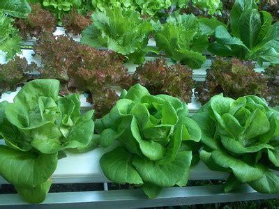 ประโยชน์การปลูกพืชไร้ดิน