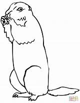 Prairie Dog Coloring Brown Pages Squirrel Drawing Ground Printable Supercoloring Categories sketch template