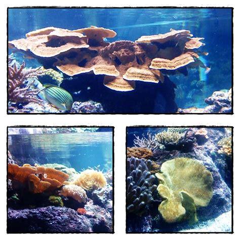 visite de l aquarium de la rochelle 2 232 re partie 3 septembre 2012 paperblog