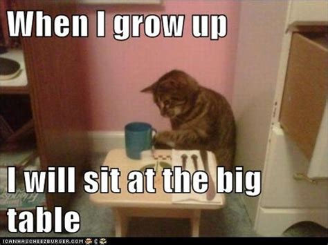Best Thanksgiving Memes - 7 cute funny and awesome cat memes for thanksgiving