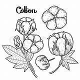Coloring Pages Cotton Crops Printable Getdrawings Books Getcolorings Google sketch template