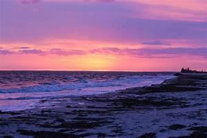 Tropical Beach Sunset With Dolphin - Hot Girls Wallpaper