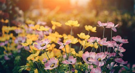 ijsheiligen voorbij zet de bloemetjes maar buiten reclamefolder nieuws