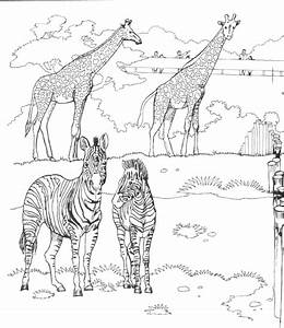 Zoo Coloring Pages For Kids