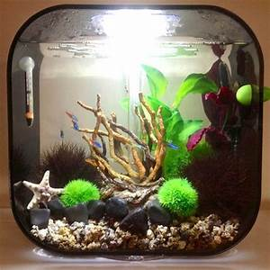 89 best images about Biorb Aquarium inspiration on
