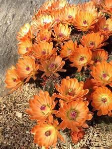 Desert flowers | Plant life | Pinterest