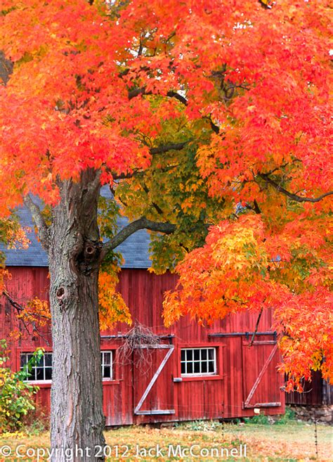 fall foliage  red barn hill stead jack mcconnell