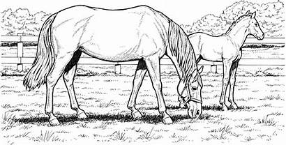 Horse Coloring Pages Detailed Kindergarten Printable Learning