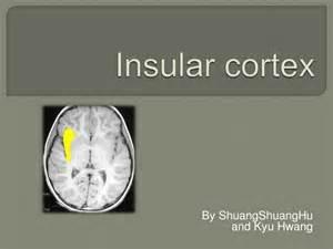Brain Insular Cortex