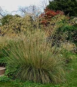 Plantes à Feuillage Persistant : mes vivaces inratables feuillage persistant jardin de ~ Premium-room.com Idées de Décoration