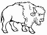 Bison Coloring Drawing Buffalo Clip American Clipart Cartoon Water Pages Awesome Cliparts Nice Colorluna Printable Drawings Getcolorings Indian Native Getdrawings sketch template