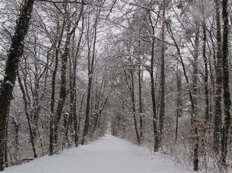 picture forest snow winter wood tree frost