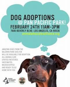 dog adoption flyer template - 1000 images about dog flyer inspiration on pinterest