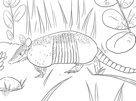 banded armadillo coloring page  printable