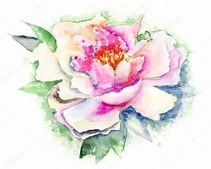 Beautiful Peony flower, Watercolor painting — Stock Photo ...