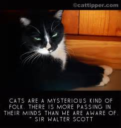 cat sayings cat quote sir walter cattipper