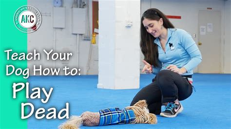 how to teach your to play dead teach your dog how to play dead akc trick dog youtube