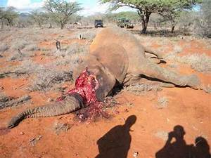 ShockWildlifeTruths: Poachers kill 26 elephants in Chobe ...