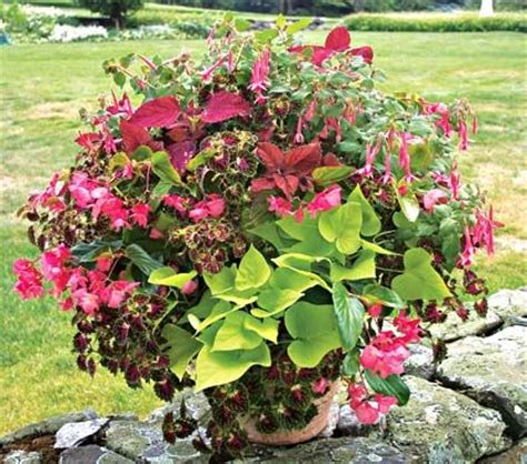 867 best images about flowers gardens containers